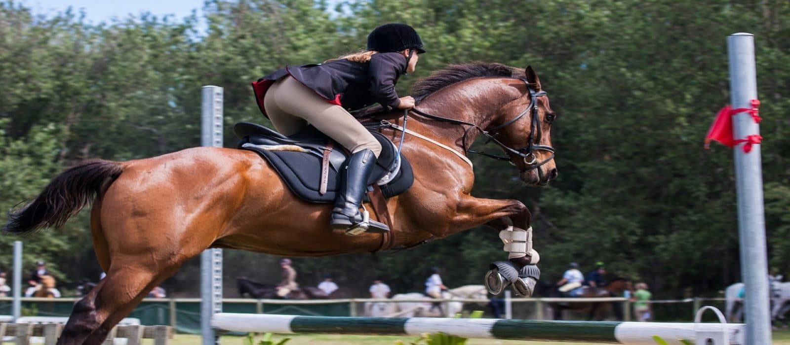 Hunter-Jumper-Horse